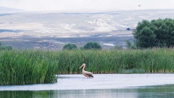balikdami kus cenneti - Kuş Cenneti Balıkdamı